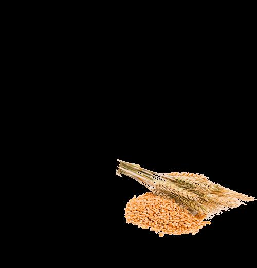 100% Whole Wheat Rusk