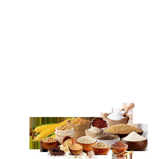 multigrain-bread-modernfood-product-hover