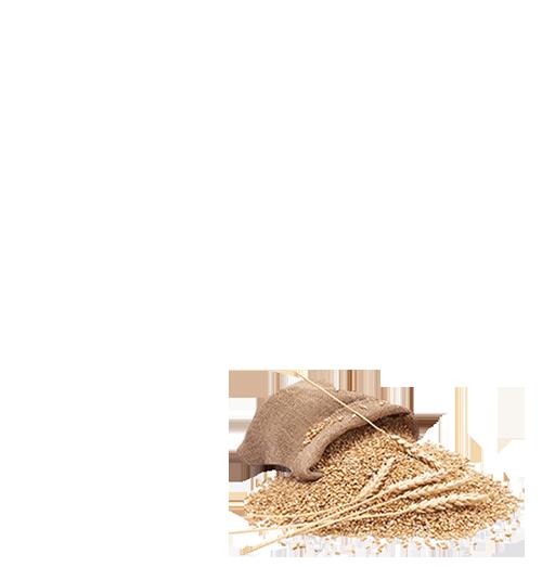 100% Whole Wheat Malabar Parota