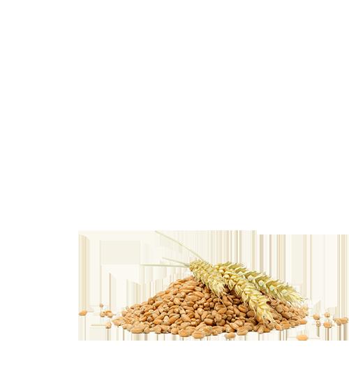 100% Whole Wheat Chapathi